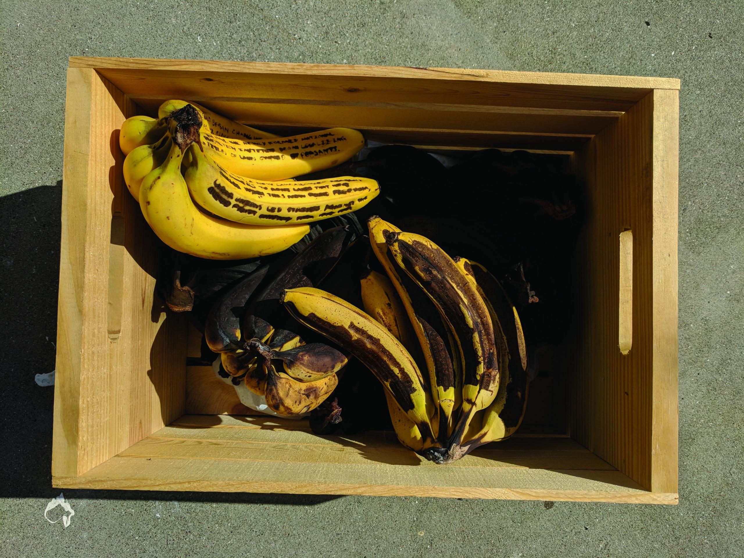banana_5